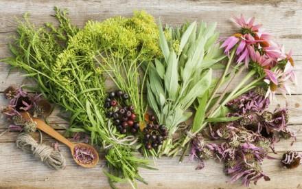 Homöopathie – Was ist wirklich dran?